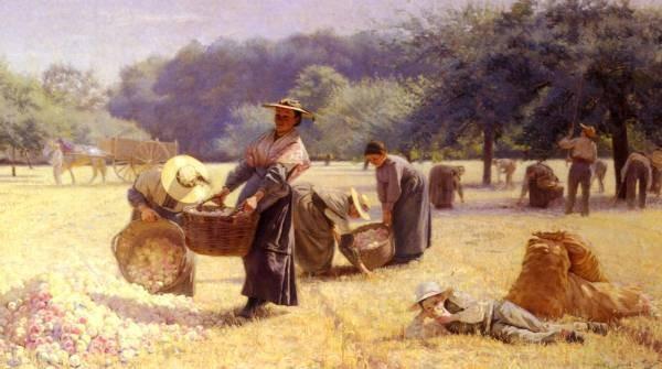 La vendange De Pommes